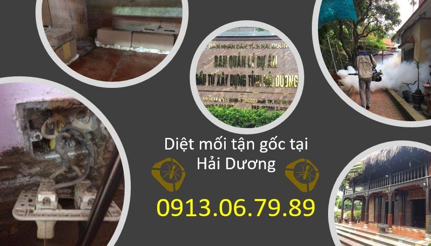 diet-moi-tai-hai-duong