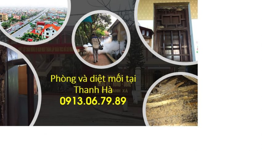 Diệt mối tại Thanh Hà