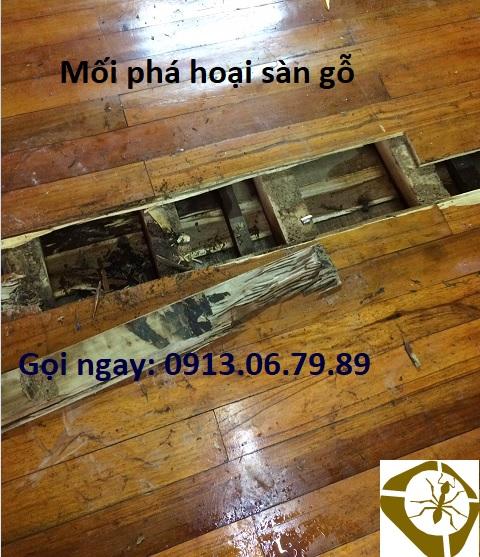 Mối phá hoại sàn gỗ