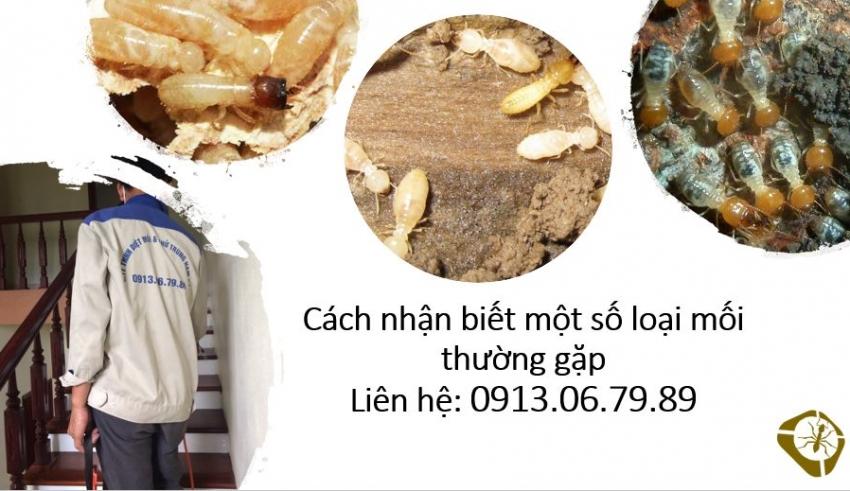 nhan-biet-moi-thuong-gap