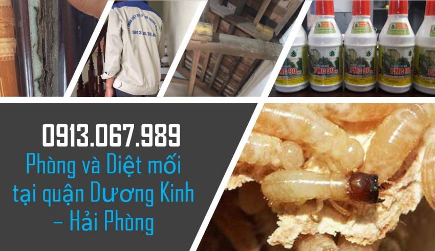 diet-moi-tai-duong-kinh-hai-phong