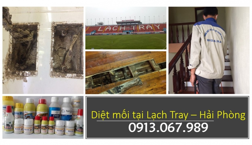 diet-moi-tai-lach-tray-hai-phong