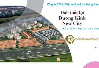 diet-moi-tai-duong-kinh-new-city