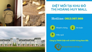 diet-moi-tai-hoang-huy-mall