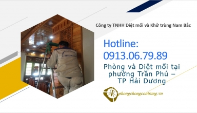 diet-moi-tai-tran-phu