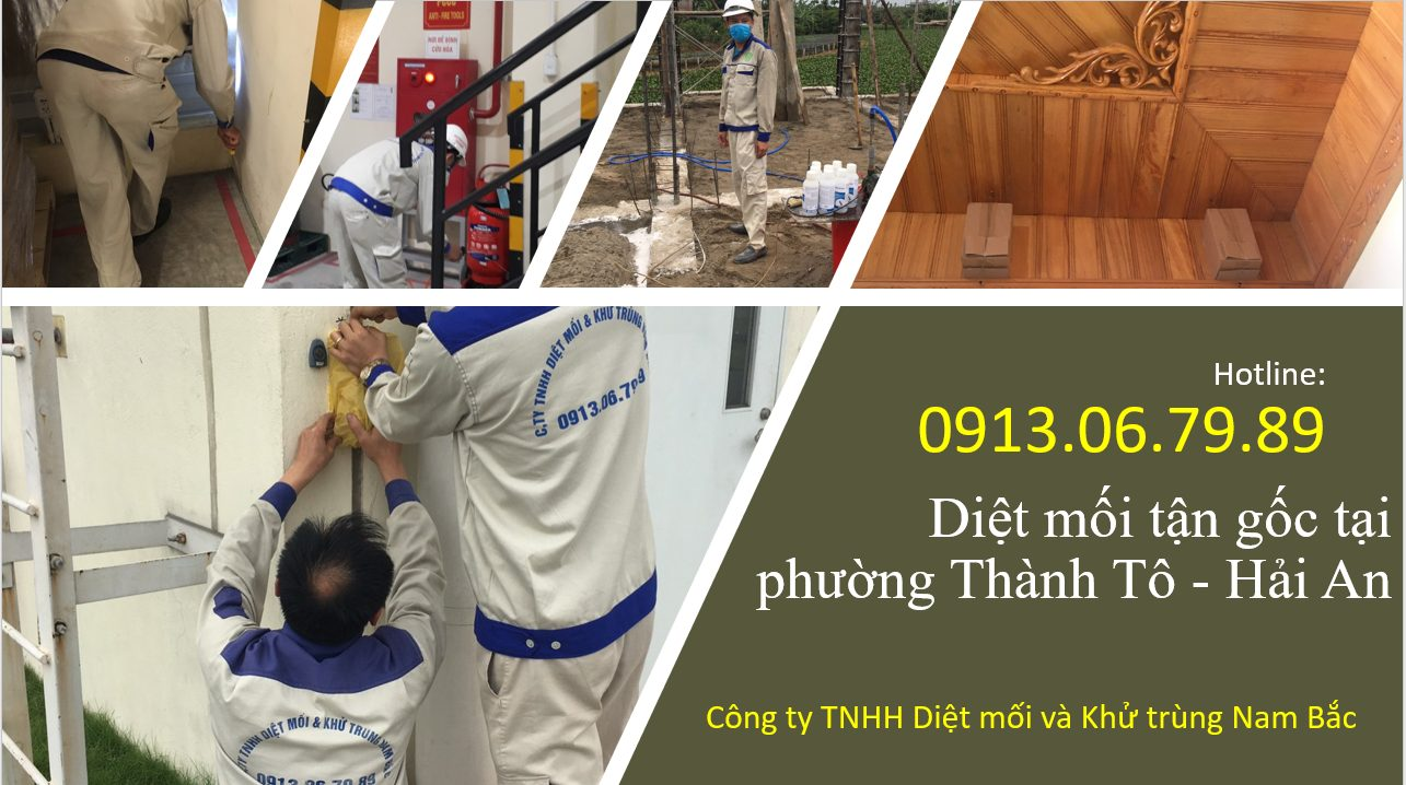 diet-moi-thanh-to